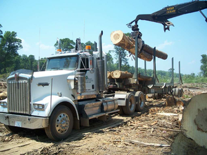 Meet the North Carolina 'Swamp Loggers'