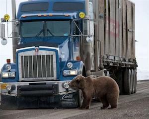 Close encounters on the Alaskan 'Haul Road'