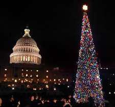 U.S. Capitol tree lit