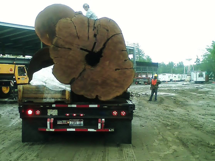 "Reader C. Dunnington hauled these massive cedar logs ""to Bellingham, Wash., out of Canada via Bonners Ferry, Idaho,"" he says. The yellow cedars ""were estimated at four to six hundred years old. They were found in water, and it was estimated that they had been in the water for at least 100 years! The log on the back was nine feet, eight inches across at the widest point."""