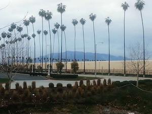 No-nos -- pantless in L.A.