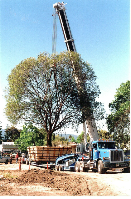 There are heavy hauls, and then there are heavy hauls: The big oak tree had to be saved, says Geoff Mauch, 40' by 40' by 110'. One mighty oak, indeed, to say nothing of the rig...