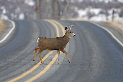 Where and when deer strikes are most likely