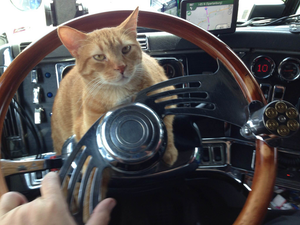 """Mike is owned by Amy Williams, a Panther Expedite owner-operator. """"He greets all the customers we visit,"""" writes Williams. """"Motorists point at him and tell us how cute he is."""""""