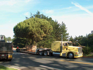 """The Presidio, San Francisco, moving live trees,"" noted reader Eric Witze."