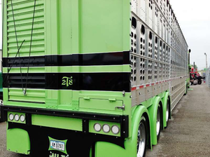 """What the above shot doesn't show is the custom touches on the rear of the Wilson trailer. Says Dan Brubaker. """"We had it all custom-painted, put the striping there to match the truck. And we built the light-bar at the bottom and mounted single-hump fenders all across the rear wheels,"""" certainly rare treatment for a tri-axle cattle trailer."""