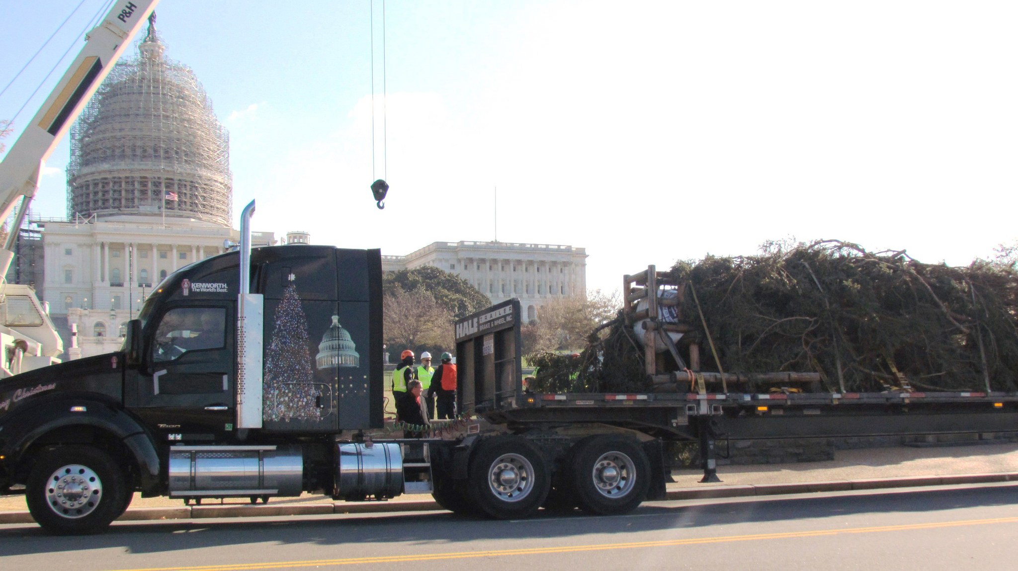 Capitol Christmas Tree delivered to D.C. after trucking-sponsored 2,700-mile trip