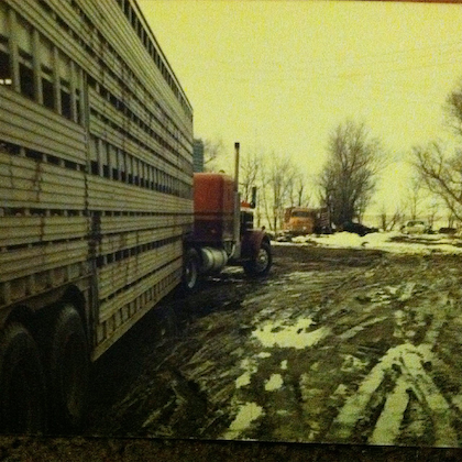 One bull hauler's mid-1980s test