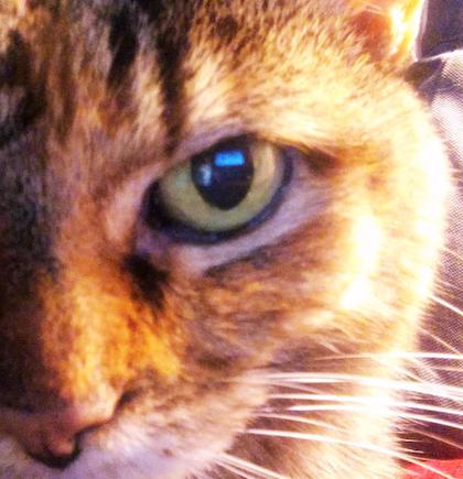 one-eye-cat