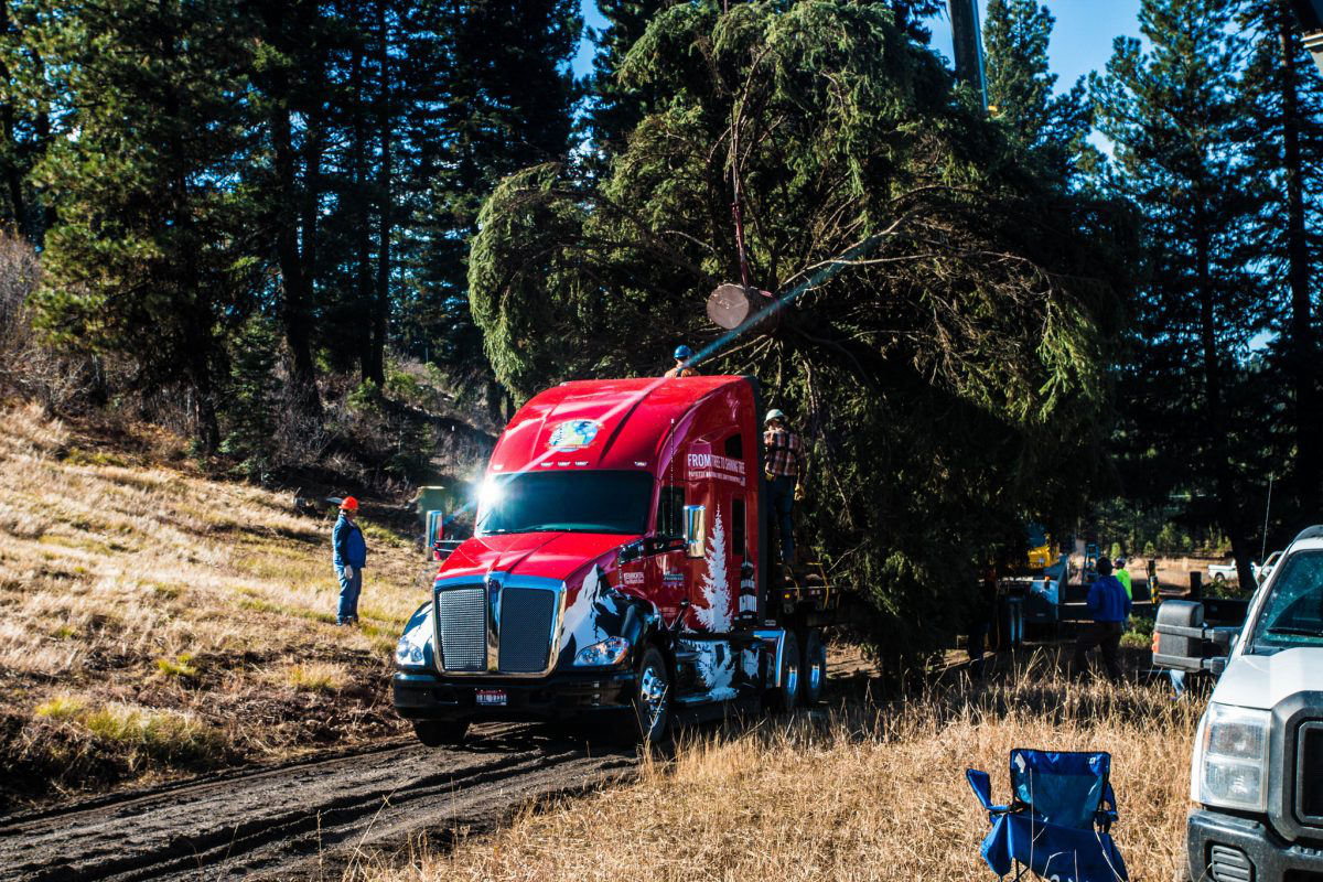 U.S. Capitol Christmas Tree begins cross-country journey