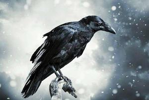 raven-002
