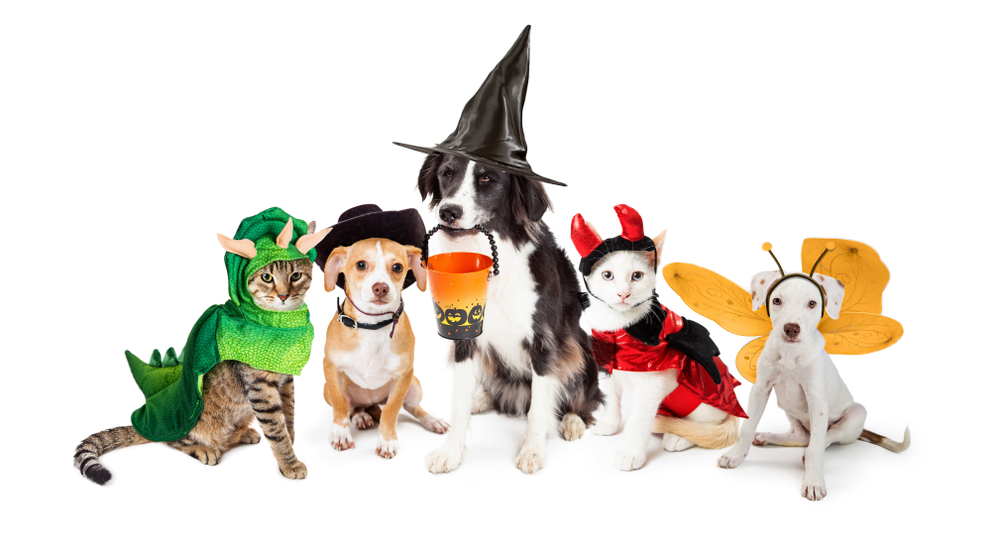 8ed240e3c166 Share a picture of your pet in a Halloween costume