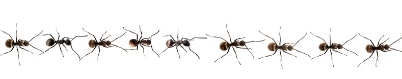 Nine ants in a row