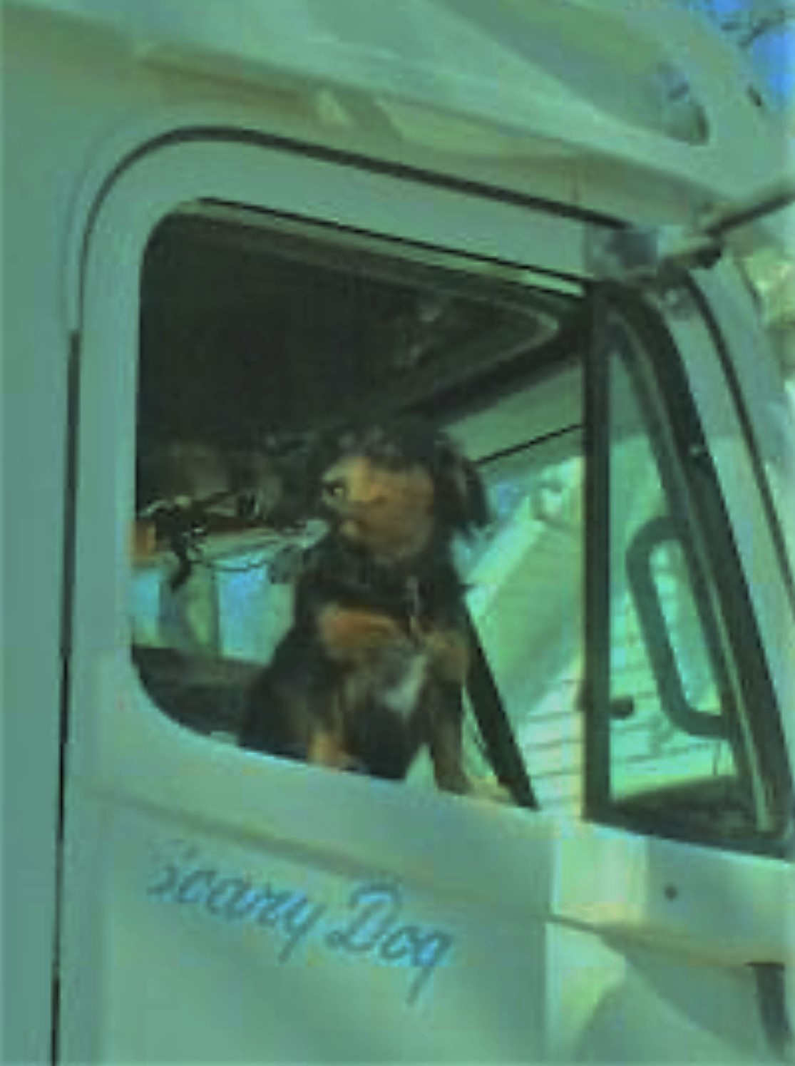 dog at the passenger side window of a semi truck